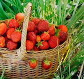 Корзины для ягод и грибов