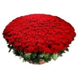 "Подарочная корзина ""501 роза"""