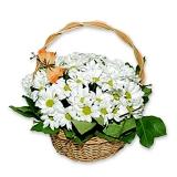 Корзина цветов (Ромашковидные хризантемы)