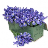 """Цветы в коробке """"Радуга"""""""