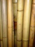 Бамбуковый ствол (натуральный)